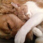 El seguro para mascotas, entre los cuidados necesarios para animales domésticos