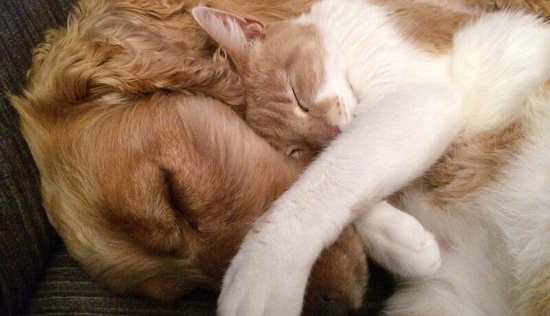 seguros para mascotas en Asturias