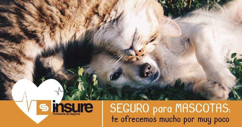 Seguro para mascotas, Asturias